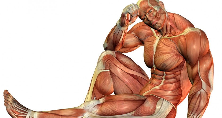 athletic xtreme | articles & news | a breakdown of muscle fiber types, Muscles