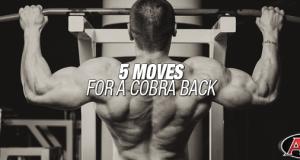 5 Moves For A Cobra Back