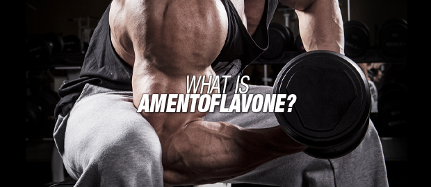 What is amentoflavone?